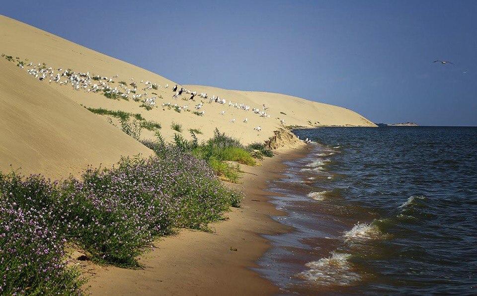 Дюны и залив. Фото : М.Torgashova